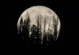 The Supermoon rose over the Dark Sky Community of Summit Sky Ranch in Silverthorne, Colo, with Evergreen trees getting silhouetted on the mountain top.