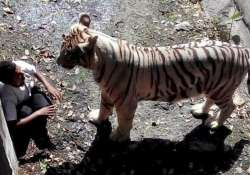 The man was killed by a white tiger in September 2014.