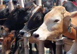 Dalit man, mother thrashed for skinning dead cow near
