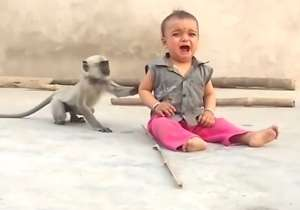 Monkey and a child- India Tv