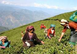17 per cent tea garden workers in assam have tuberculosis