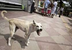 stray dogs maul 6 year old girl to death in mp villagers to