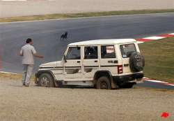 stray dog saunters on to f1 race track in presence of world