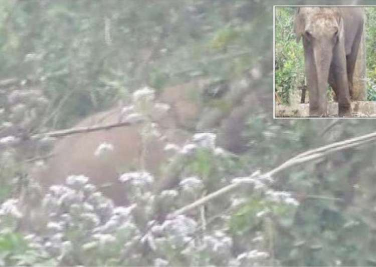 madly in love male wild tusker breaks into odisha zoo to- India Tv