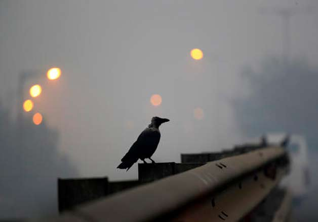 A crow sits on the railing of an overpass enveloped by smoke and smog, on the morning following Diwali festival in New Delhi, India, Monday, Oct. 31, 2016. As Indians wake Monday to smoke-filled skies from a weekend of festival fireworks for the Hindu holiday of Diwali, New Delhi's worst season for air pollution begins, with dire consequences. A new report from UNICEF says about a third of the 2 billion children in the world who are breathing toxic air live in northern India and neighboring countries, risking serious health effects including damage to their lungs, brains and other organs.