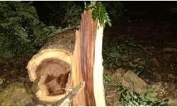 Aaarey Colony tree felling