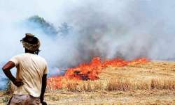 Rs 2,500 per acre compensation for Punjab farmers who didn't burn crop residue