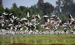 Rajasthan bird death case: Kashmir wildlife authorities on alert