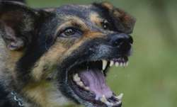 Delhi High Court directs the authorities to Provide anti-rabies vaccine to hospitals
