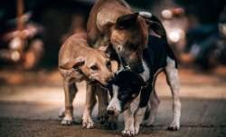 Nagaland bans dog meat trading, sale of cooked and uncooked meat