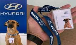Hyundai goes 'paw-fessional'; adopts street dog who used to hang outside showroomas as car salespers