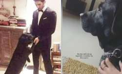 Sushant's dogs Amar, Akbar, Anthony are up for adoption