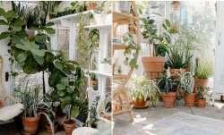 Vastu Tips: Pots in your garden should be kept in THIS direction